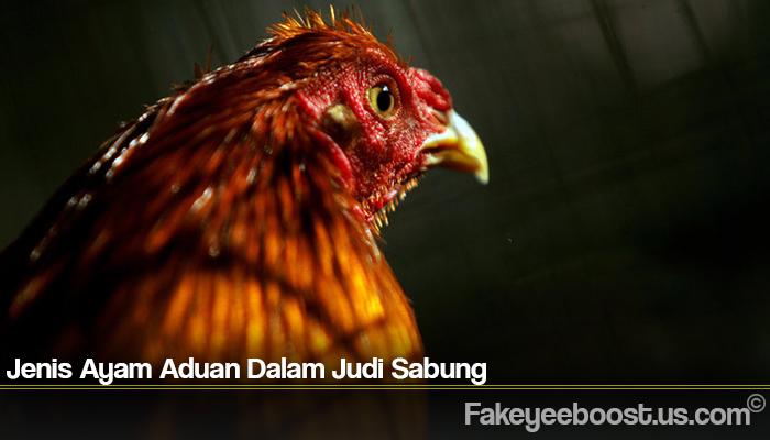 Jenis Ayam Aduan Dalam Judi Sabung